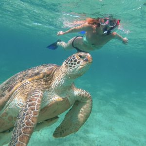 The girl is swimming next to the sea turtle. Red sea. Marsa Alam