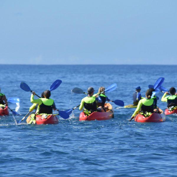 Kayak Tours Maui